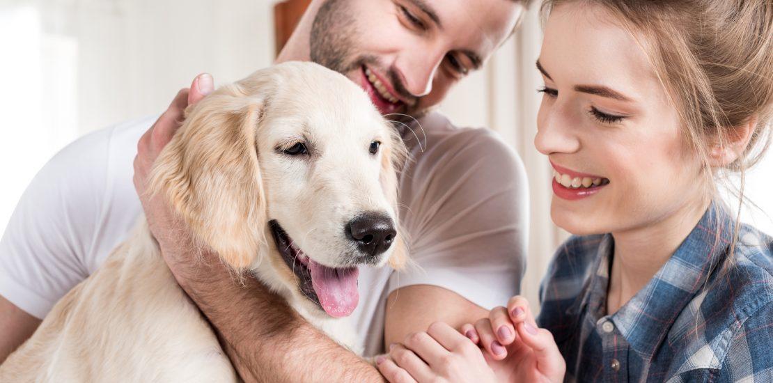 animaux de compagnie, antip -parasite pour chien,